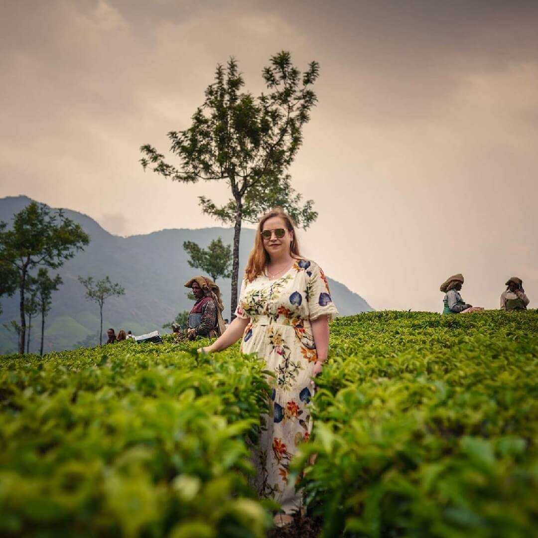 Tea Plantations at Munnar Kerala