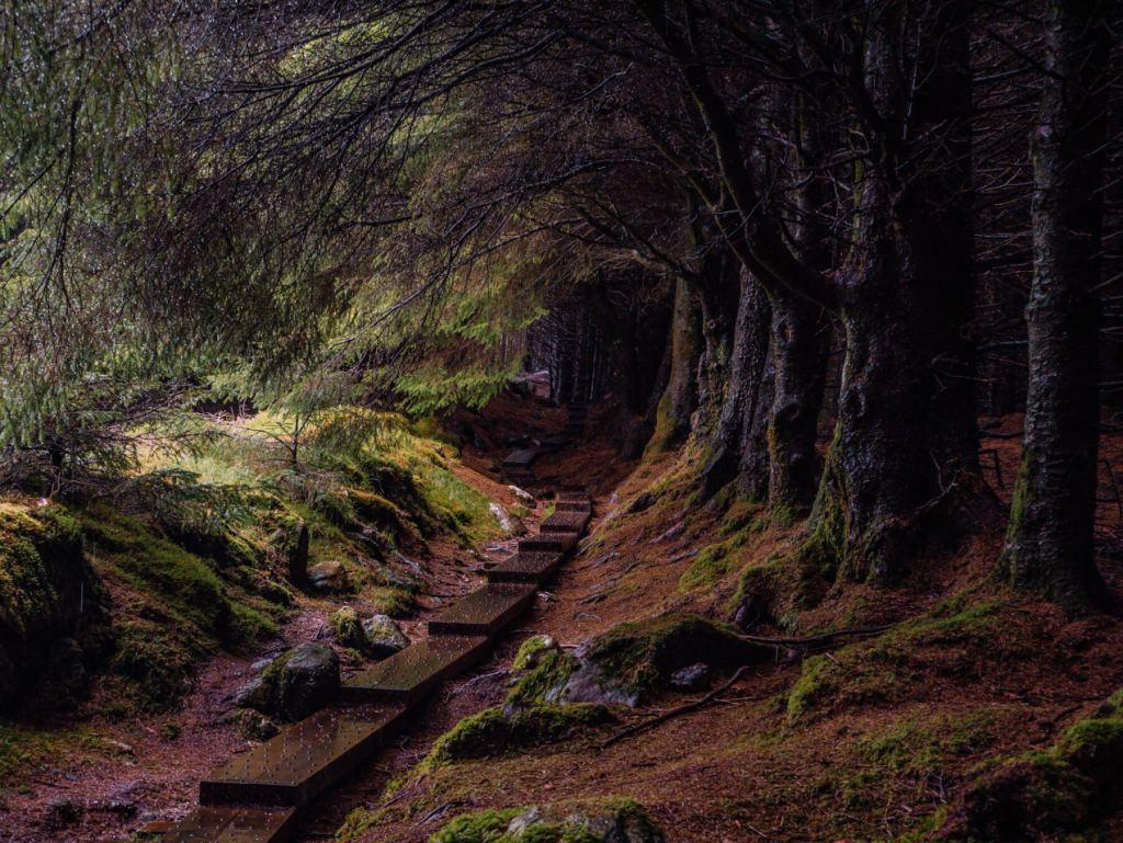 Wooden walkway leading through Ballinastoe woods in Wicklow Ireland