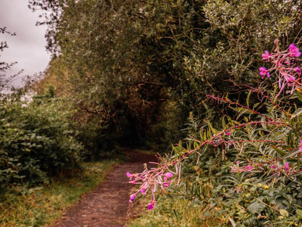 Path through a woodland walk in County Wicklow Ireland a fun thing to do on your staycation Ireland.