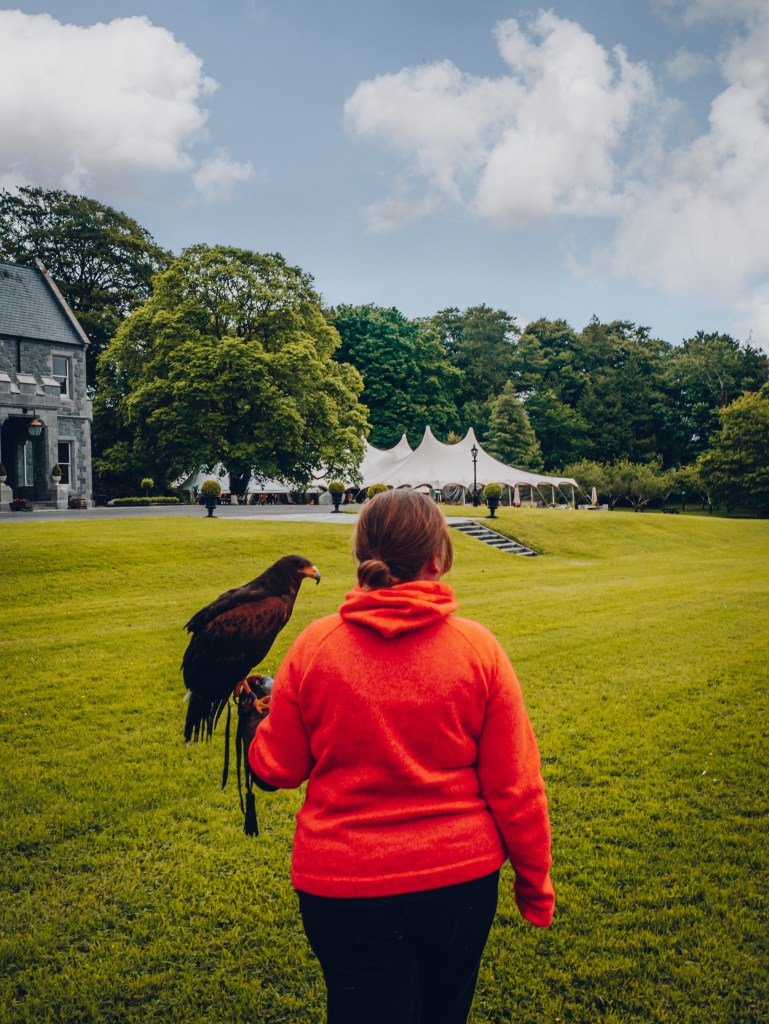 Woman in a red jumper carrying a Harris Hawk at Mount Falcon