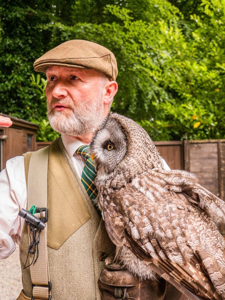Falconer holding a grey owl