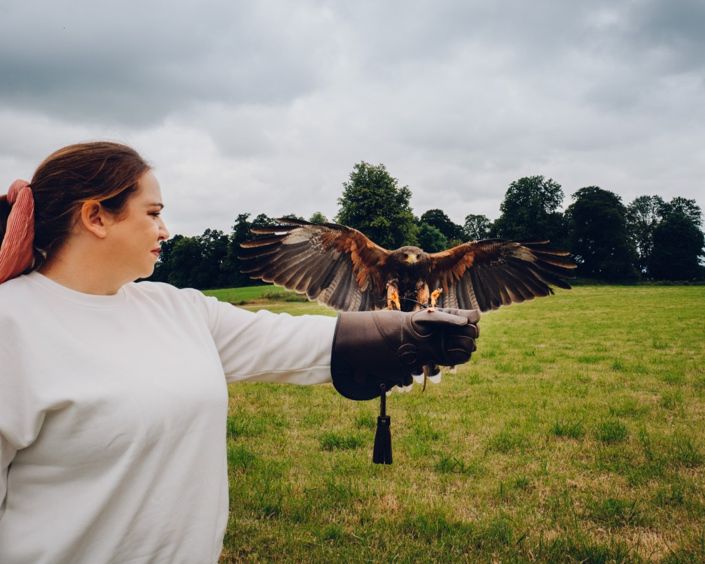 Harris hawk landing on a woman's gloved hand at a falconry experience in Kilkenny Ireland