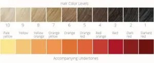 Hair Color Levels And Base Colors