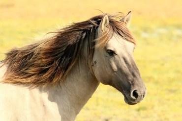 horse shampoo
