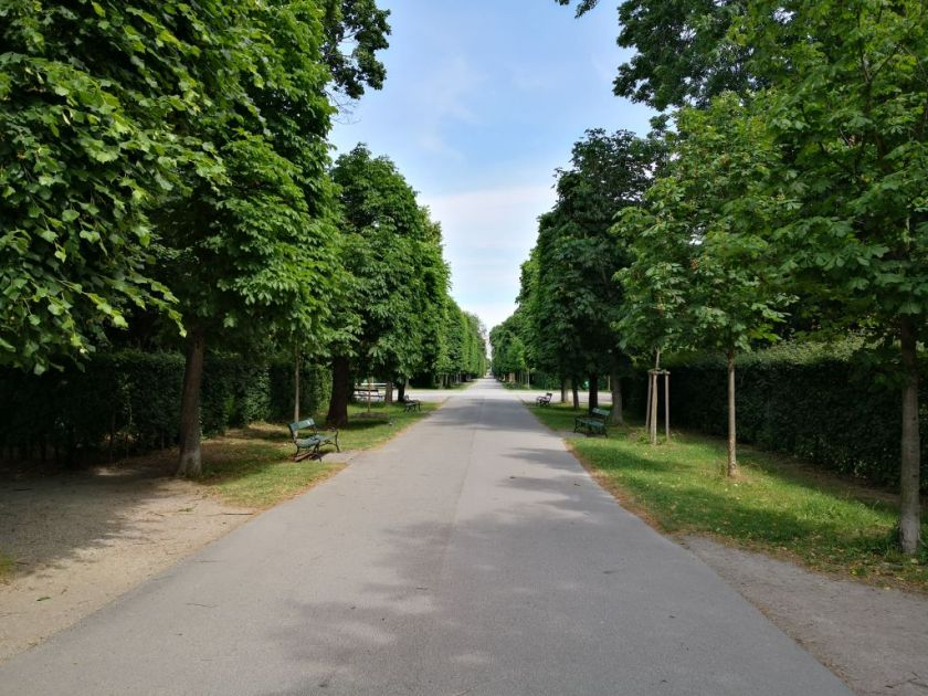 One of several avenues in Augarten