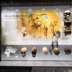 Anthropology1 - Natural History Museum Vienna