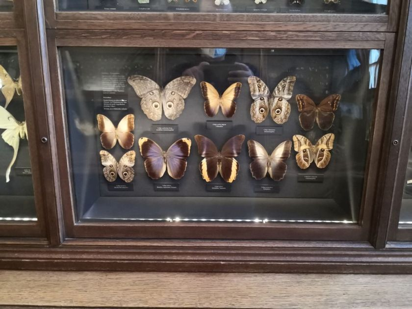 Butterflies collection - Natural History Museum Vienna