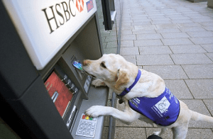 An image of a service dog inserting a card into the ATM machine.