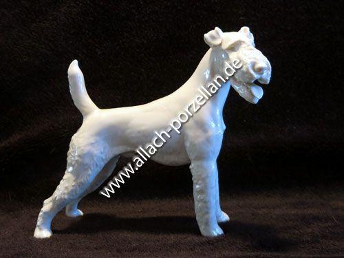 19 Fox Terrier standing