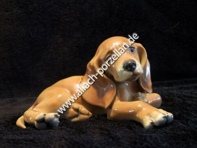 1 Young Dachshund lying, painted