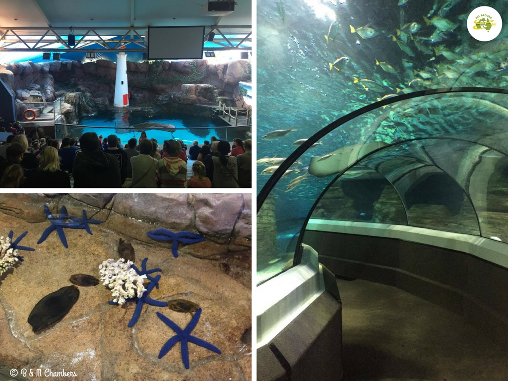 Things to do on the Sunshine Coast - Sealife at Mooloolaba