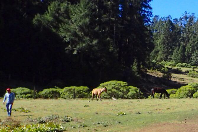 アンガンゲオの乗馬