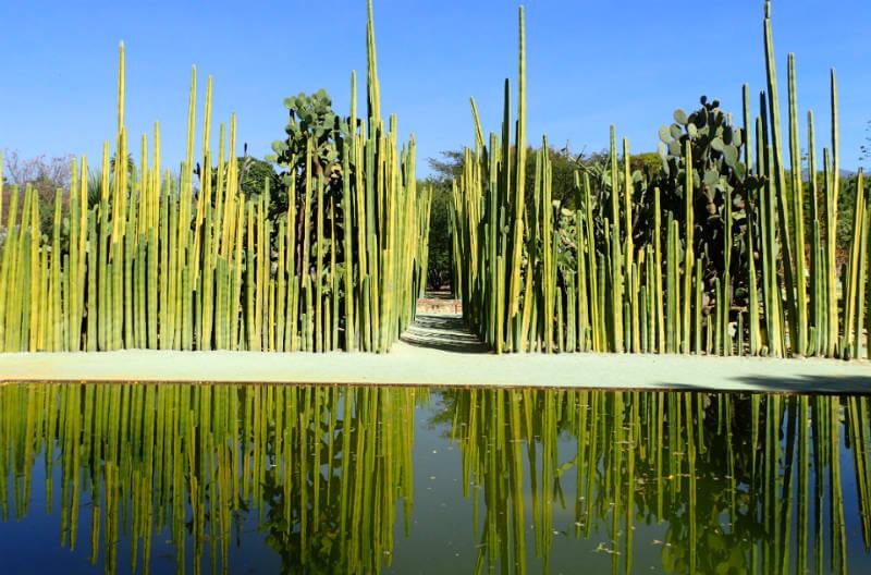 サボテン畑(オアハカ民族植物学ガーデン)