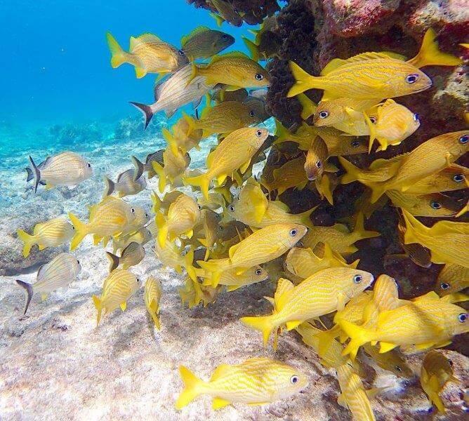 コスメル島の魚たち(シュノーケル)カンクン