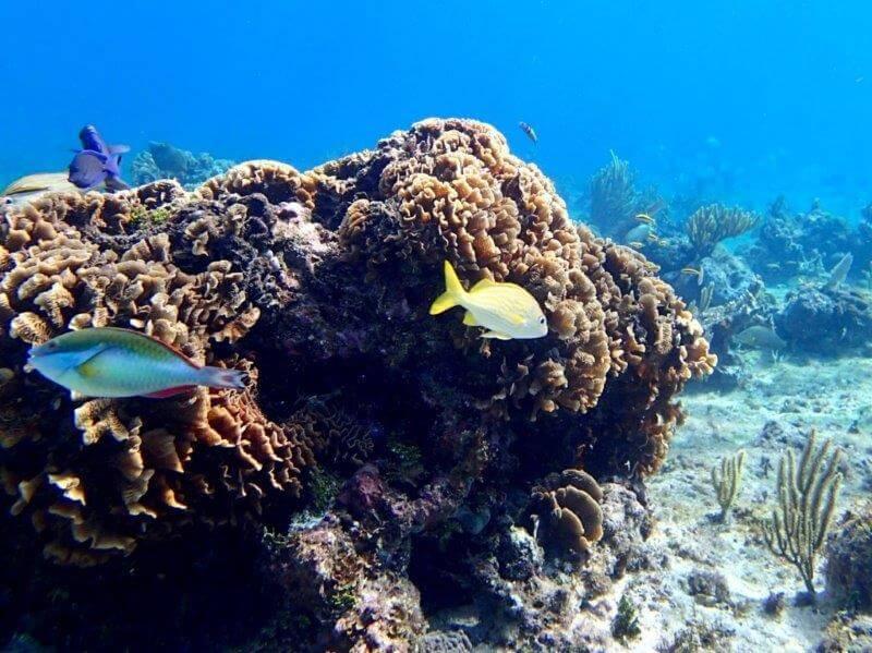 コスメル島でシュノーケリング(魚)