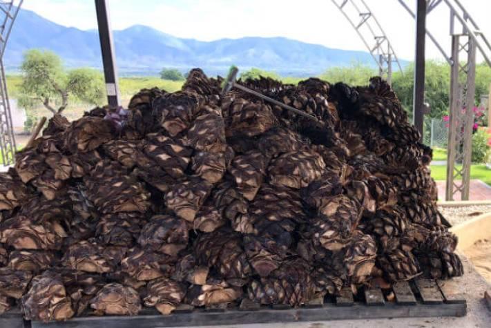 メスカル工場(オアハカ)発酵したアガベ