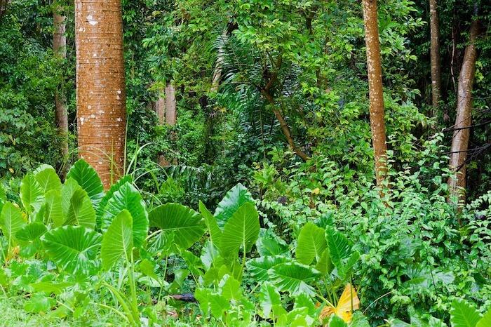 熱帯雨林と雨