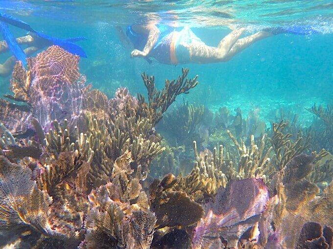 カンクンの珊瑚礁(シュノーケリング)