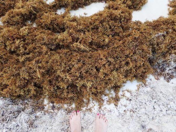 海藻まみれのカンクンのビーチ7