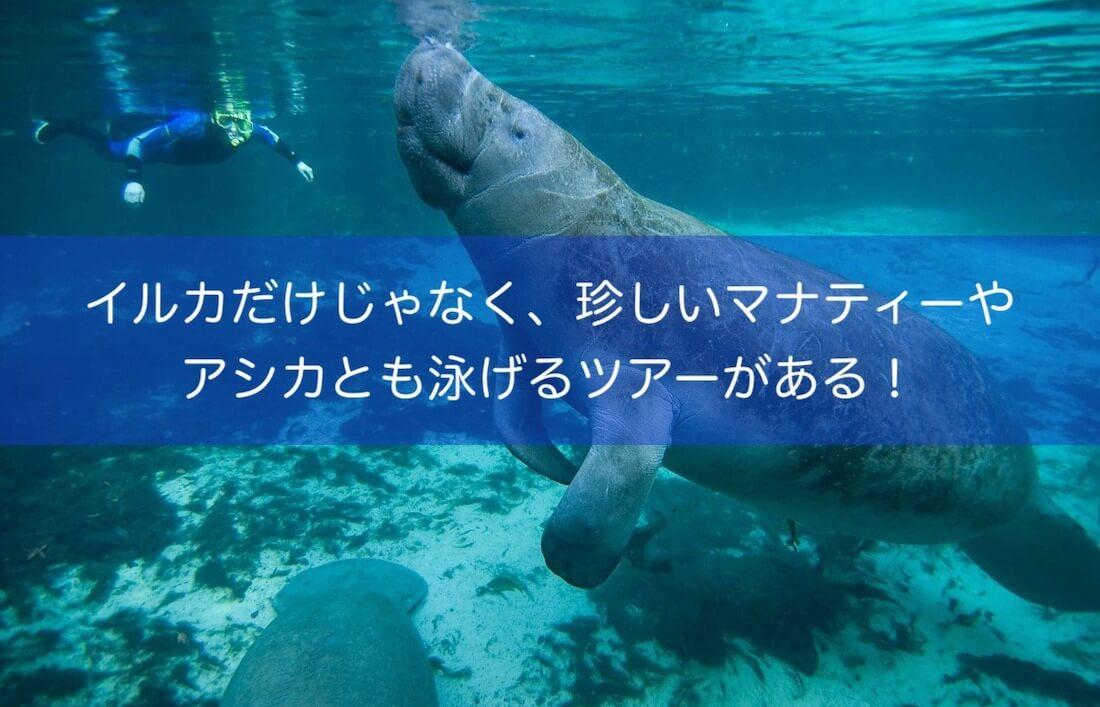 マナティーやアシカ、イルカと泳げるツアー@カンクン