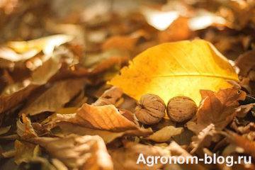 Листья грецкого ореха: как использовать в качестве удобрений