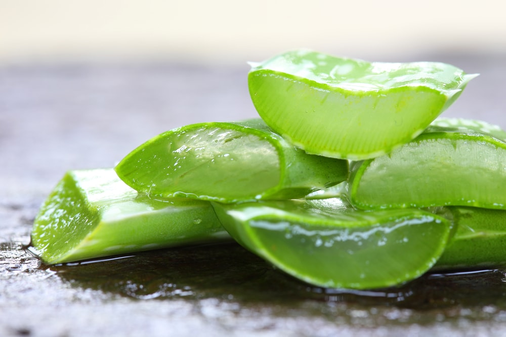 Aloe vera to soothe dry lips