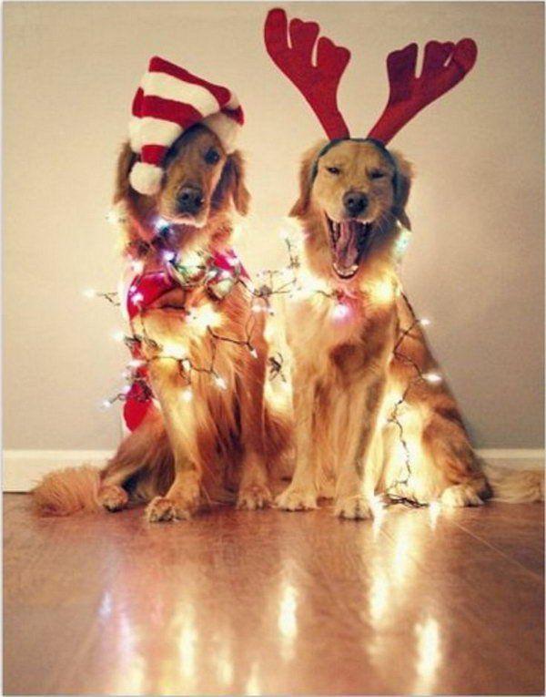 dogsnlights