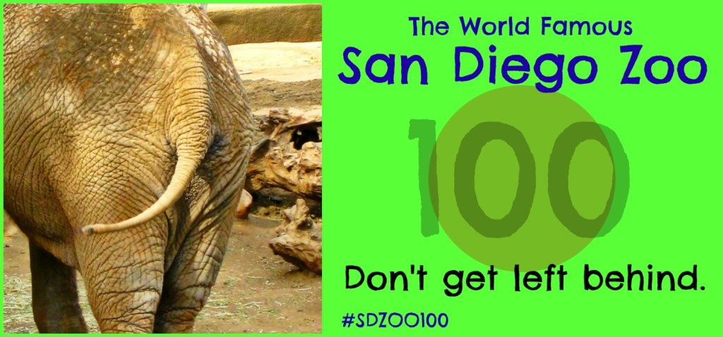 San Diego Zoo Centennial Celebration! Don't get left behind! #SDZOO100
