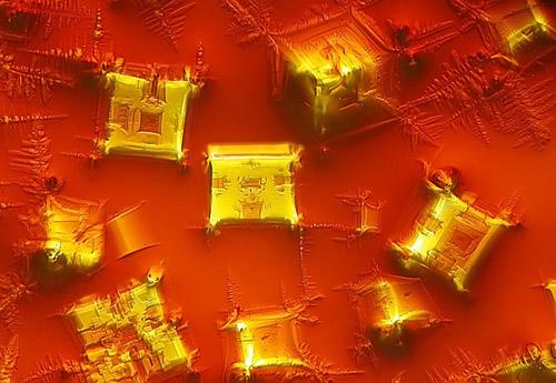 Nikon Small World - 2010. Конкурс удивительных фотографий мира под микроскопом