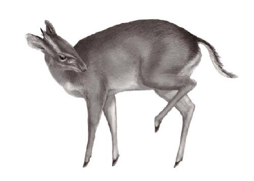 Топ-10 недавно открытых живых существ