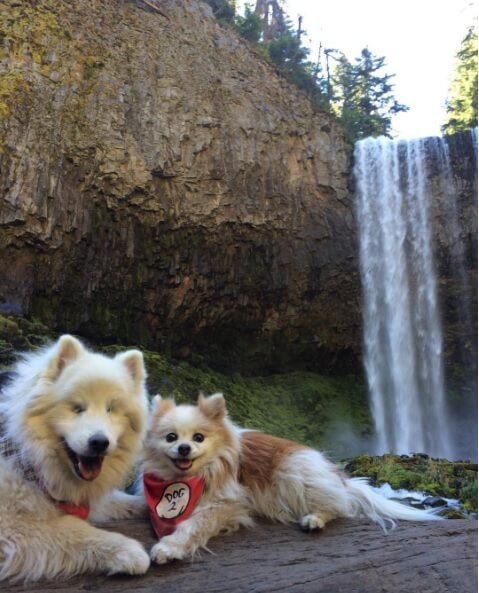 Blind Dog & his wonderful guide puppy