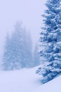 Fir in winter landscape - Homemade Snow Cream - Alldonemonkey.com