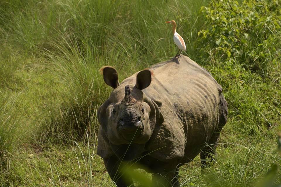 Neushoorns spotten in het nationaal park Chitwan