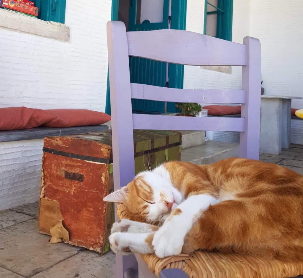 Een kat in het dorp Pyrgos