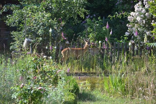 tierischer Besuch am Gartenteich