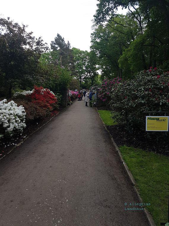 Eingang zum Pflanzenmarkt