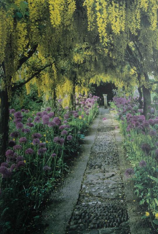 Mit Zierlauch unterpflanzter Goldregengang. Konzept durch Rosemary und David Verey