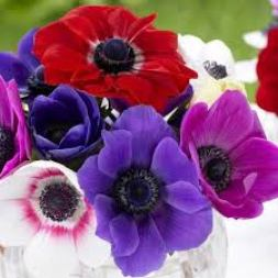 Image result for anemone flower