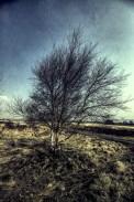 norland-tree-study-01