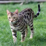Katzenallergie Symptome Bilder Allergiefreie Katzen Für