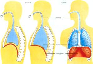 Бронхиальная астма формы и степени тяжести