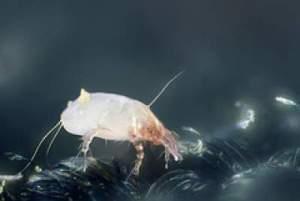 dust mite allergy prevention