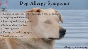 Dog-Allergy-Symptoms