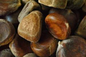 chestnut allergy