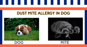 DUST MITE ALLERGY IN DOG, FB