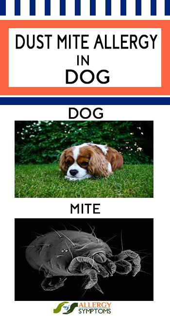 DUST MITE ALLERGY IN DOG