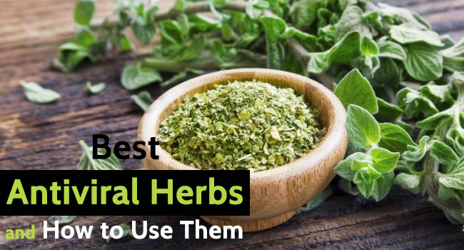 Best Antiviral Herbs and How to Use Them - Allergy-symptoms org