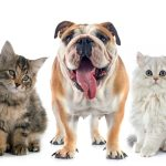 pet allergies and asthma