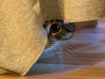 Verhalten der Katze bei Angst