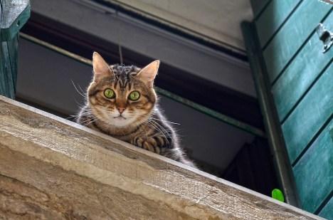 Getigerte Katze am Fenster